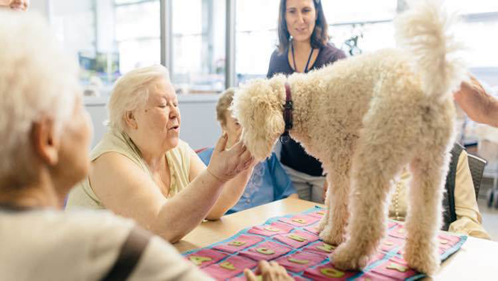 Científicos brasileños frenan avance de alzheimer en animales