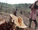 The Colombian government is worried about the staggering figures of deforestation affecting citizens.
