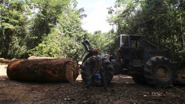 A man walks past a vehicle ready to drag a log from the forest in Jamanxim national park. He was hired by loggers to cut down trees in the Amazon rainforest