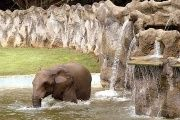 An elephant is seen at the Dr. Juan A. Rivero Zoo in Mayaguez, Puerto Rico.
