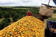 Orange peels have enriched the land on the national park in Costa Rica