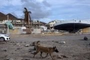 Hurricane Irma devastated almost 90 percent of Barbuda's building structures.
