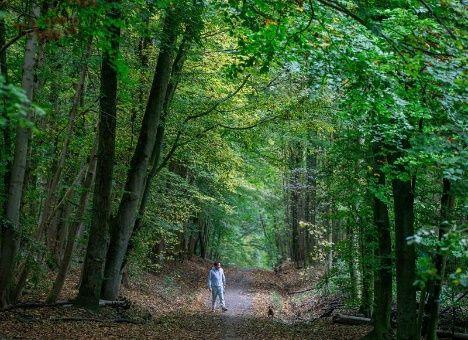 La protección y el cuidado de la Naturaleza es responsabilidad de todos.