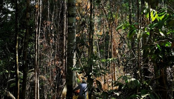 A man cuts down a tree with a chainsaw in a forest near the municipality of Itaituba, Brazil August 7, 2017.
