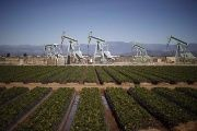 Oil pump jacks are seen next to a strawberry field in Oxnard, California, Feb. 24, 2015.