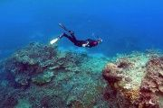 Usually, strong currents, winds, and waves prevent reproductive cells from nestling along the coral.