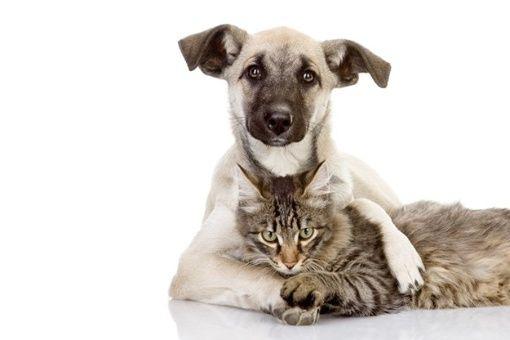 Resultado de imagen para perros gatos inteligentes