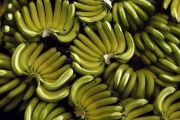 In 1928 banana pickers organized a strike to bring highlight their grouses.