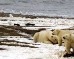 The 19.6-million acre refuge is home to polar bears, caribou, migratory birds and other wildlife