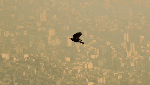 A bird flies through the polluted sky of Tehran, Jan. 25, 2007.
