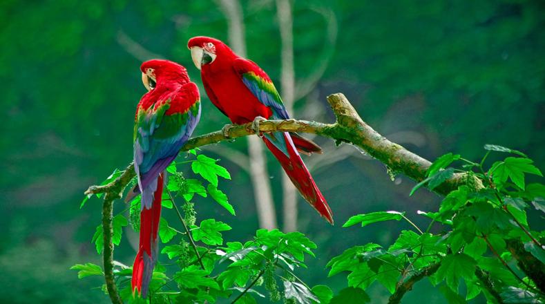 En Fotos 10 Aves Que Están En Peligro De Desaparecer