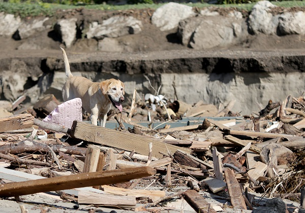 Los Angeles Search and Rescue dog Veya searches for bodies along the beach. One of California