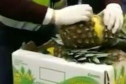 In 2014, a shipment of 2.5 tons of cocaine-filled pineapples were seized in Spain.