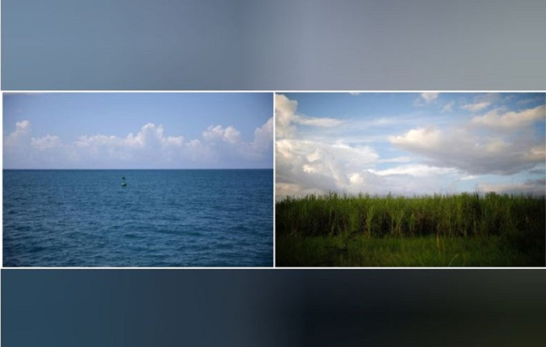 Two views: one from the Naval base, a buoy bouncing in the Caribbean waves. The second pictures a sugar cane field just outside the city of Guantanamo, Cuba.