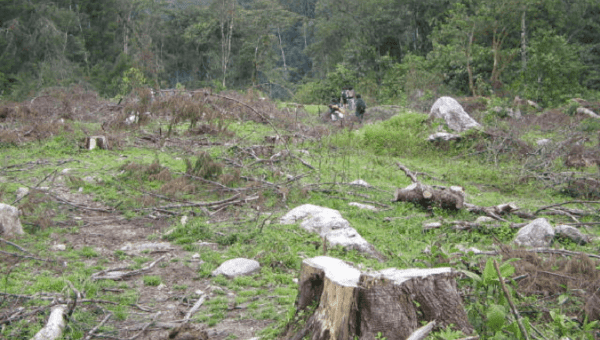Deforestation in Colombia increases at an alarming rate.