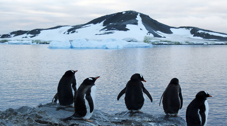Estos pingüinos estan ubicados en uno de los nueve islotes que se encuentran en el archipiélago del mar de Weddell, al este de la Península Antártica.