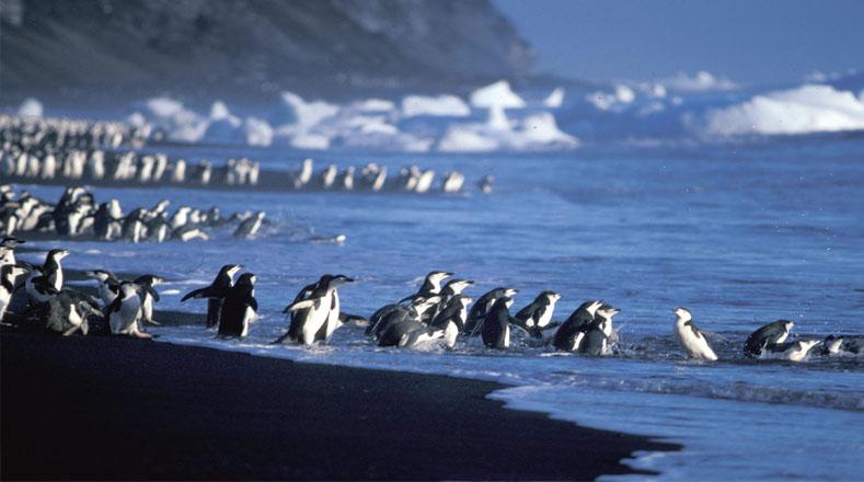 Las imágenes tomadas por el satélite fue gracias al programa Landsat de observación de la Tierra de la NASA, que revelaron también, la existencia de otra cantidad de pingüinos pero en otras islas.