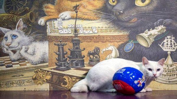 """El gato ya tiene su """"pase oficial de aficionado"""" para la cita."""