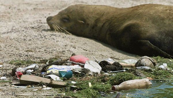 Plastic pollution washed onshore Galapagos Island.