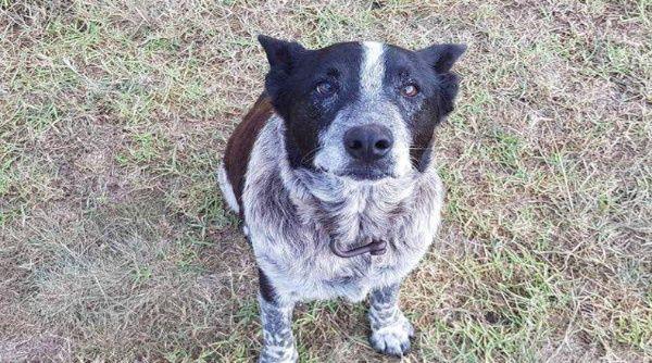 Max fue condecorado e integrado al equipo de la policía de Queensland.