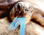 """Where do the plastic bags go?...90 percent of seabirds have plastic in their stomachs,"" Piñera said."