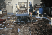 Up to 80 plastic bags extracted from within a whale are seen in Songkhla, Thailand, in this still image from a June 1, 2018 video footage by Thailand's Department of Marine and Coastal Resources. Thailand's Department of Marine and Coastal Resources