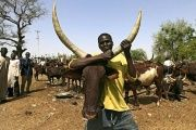 The Fulani herdsmen are believed to be the world's largest semi-nomadic group.