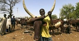 The Fulani herdsmen are believed to be the world