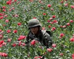 A soldier among poppy plants before a field is destroyed during a military operation in Coyuca de Catalan, Mexico, April 2017.