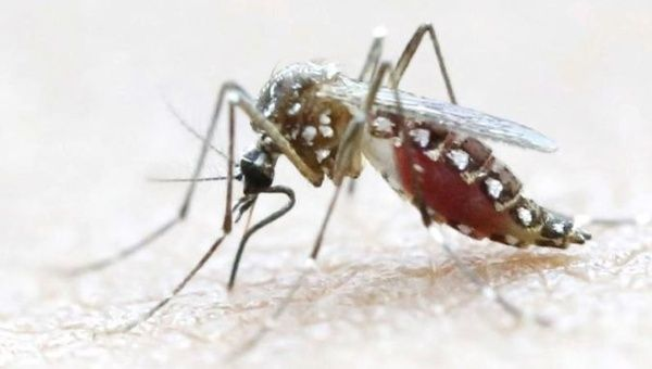 World Mosquito Day Did You Get Poked By Dengue On Face