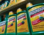 Monsanto's Roundup weedkiller atomizers are displayed for sale at a garden shop near Brussels, Belgium November 27, 2017.