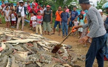 Almost 300 crocodiles killed by angry mob in a breeding farm in Indonesia.