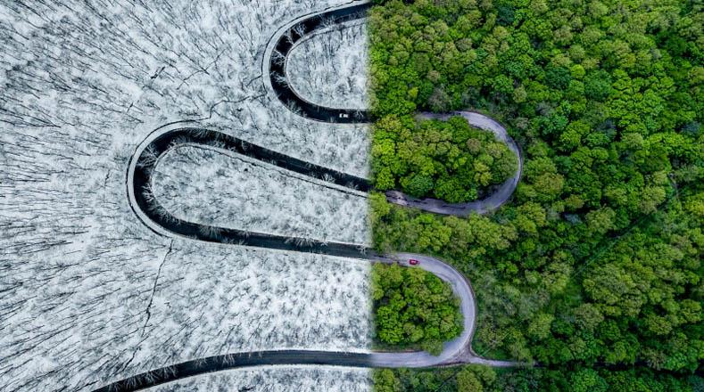 """En la categoría Abstracto, la imagen ganadora es """"Weather Snake"""" (Clima de Serpiente) de Ovi D. Pop, y muestra una carretera que se divide entre dos ambientes climáticos, uno con un bosque cubierto por el hielo y otro con el mismo bosque pero en plena primavera."""
