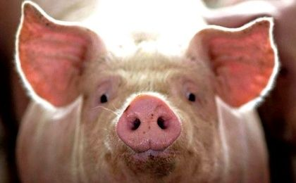 Environmentalists warned of serious damage if factory farming is allowed to continue to grow.
