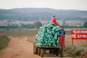 Farm workers harvest cabbages at a farm in Eikenhof, near Johannesburg, South Africa May 21, 2018.