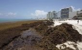 The growth of algae on the Caribbean coast is related to a rise in sea temperatures.
