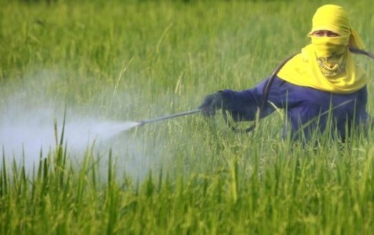 Field worker spraying a field with chemicals.