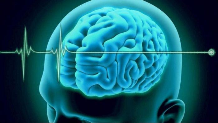 el cerebro femenino the female brain