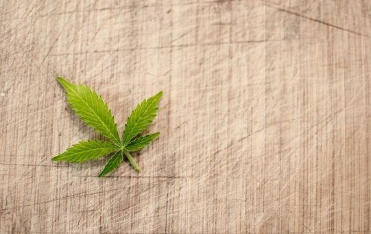 En 1935 Tailandia prohibió el uso del Cannabis.
