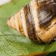 George, el último caracol de su especie, pasó estos últimos 14 años solo. Con su muerte, se extinguió su especie.