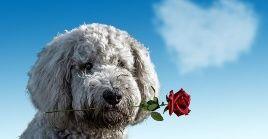 Los perros pueden descifrar el estado de ánimo de los humanos a su alrededor y transmitirles el consuelo que necesitan.