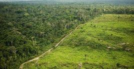La tala y quema indiscriminada destruye al año cerca de 13 millones de hectáreas de bosques en todo el mundo.