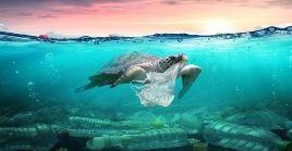 Esta celebración inició en 2009 como una iniciativa para frenar la inminente contaminación de los océanos del planeta tierra.