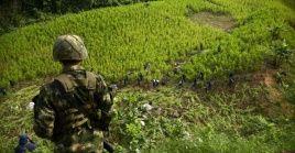 Las comunidades rurales colombianas siguen sometidas por grupos armados que les imponen cultivos ilícitos.