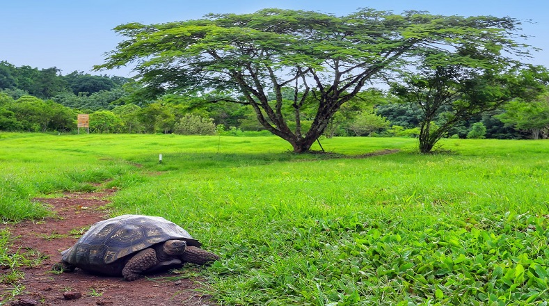Los animales más representativos de este parque ecuatoriano son las tortugas gigantes, las que le dan su nombre al archipiélago. También destacan las iguanas, los leones marinos, entre otros.