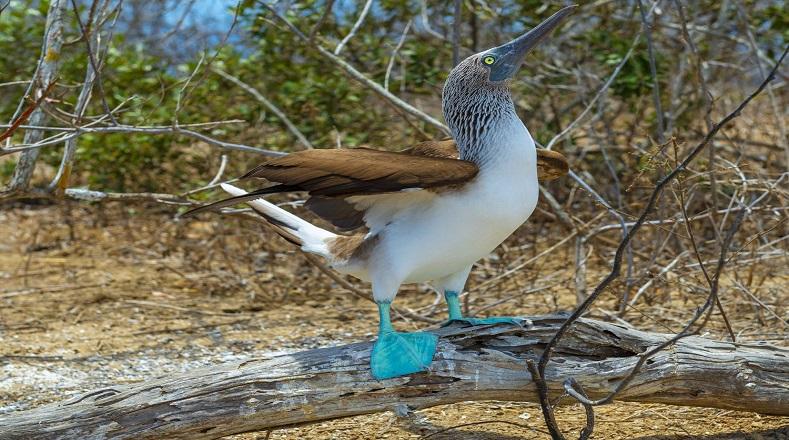 El archipiélago de Galápagos está formado por trece islas grandes, seis menores y 42 islotes, gracias a su rica biodiversidad es considerado un laboratorio natural que permitió al científico inglés Charles Darwin desarrollar su teoría sobre la evolución y selección natural de las especies.
