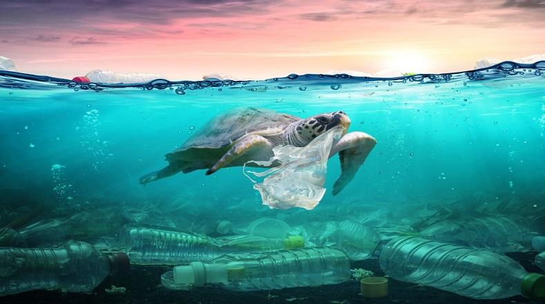 Entre las principales amenazas de este paraíso terrenal están el plástico que se arroja a los mares y a sus espacios, Carrión reveló que en 2018 recogieron 22 toneladas de desechos, la mayoría plástico, en lo que va de 2019 han colectado cerca de diez, dejando claro que las acciones humanas pueden causar grave daño a la naturaleza.