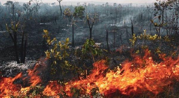 Amazonía en llamas | Noticias | teleSUR