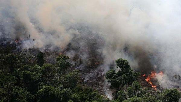 Las áreas forestales en la Amazonía han disminuido entre un 20 y un 30 por ciento en comparación con los últimos 12 meses.