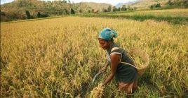 """El presidente del Fondo Internacional de Desarrollo Agrícola, Kanayo F. Nwanze, afrima que """"cuando se invierte en un hombre, se invierte en un individuo. Cuando se invierte en una mujer, se invierte en una comunidad""""."""